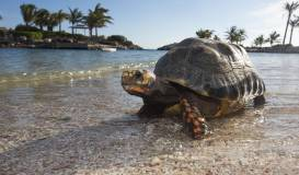 Baoase Luxury Resort Beach Turtle